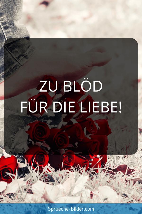 Status Sprüche - Zu blöd für die Liebe!